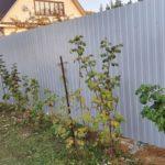 Забор из профнастила в Тюмени